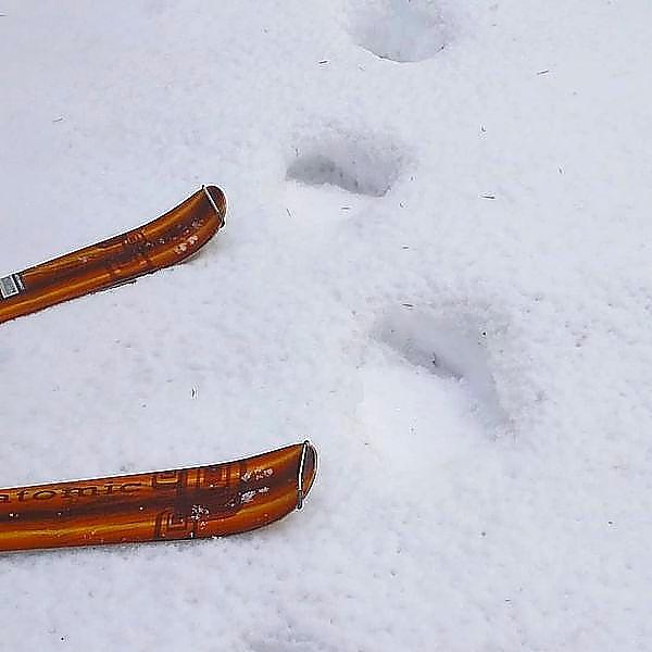 海別岳 ヒグマの足跡